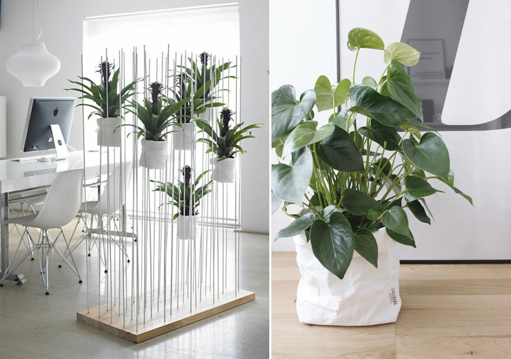 O Que E Plantscaping E Como Inserir Plantas Em Interiores